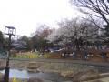 ☆桜☆東高円寺駅前の公園といえば。。