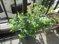 コバちゃんの家庭菜園①